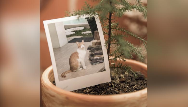 Mascotas fallecidas dan vida a plantas a través del compostaje