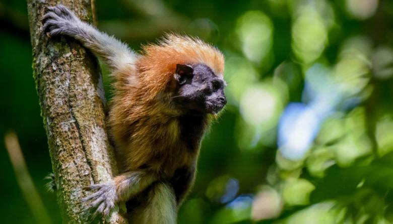 SOS por la vida silvestre en el Caribe