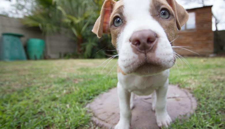 Pareja sometió a sus mascotas a dieta vegana y fue sancionada