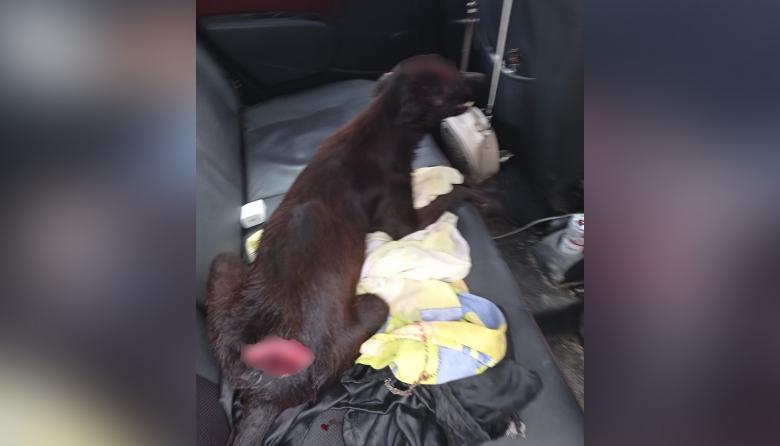 Perro en grave estado tras recibir machetazos en Santa Lucía, Atlántico