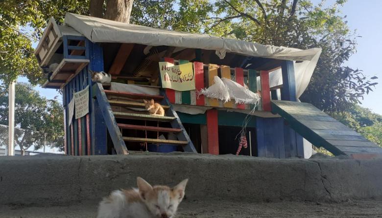 Denuncian muerte de 112 gatos en extrañas circunstancias en Santa Marta