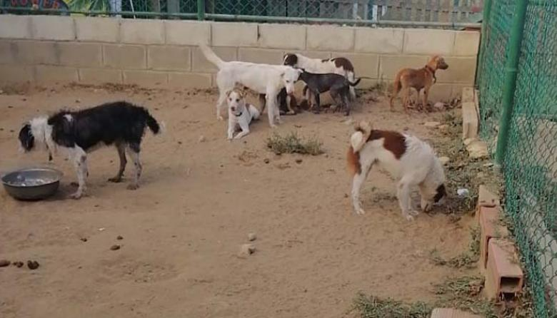 Animales rescatados de vivienda del norte de Barranquilla están bajo el cuidado de Funcuan