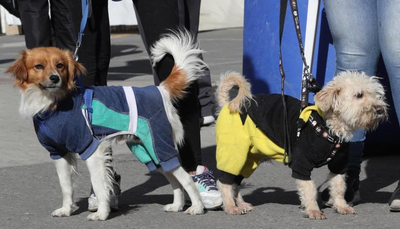 Desfile de perros abandonados en busca de ser adoptados