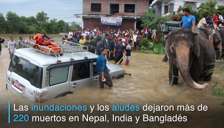 En video | Elefantes rescatan turistas en medio de inundaciones en Nepal