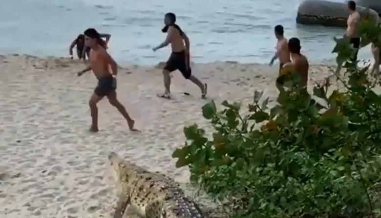 En video   Caimán aguja causa pánico en Parque Tayrona