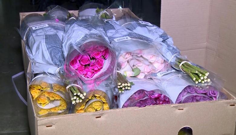 En video | Flores colombianas, listas para enviarlas a más de 100 países para el Día de San Valentín