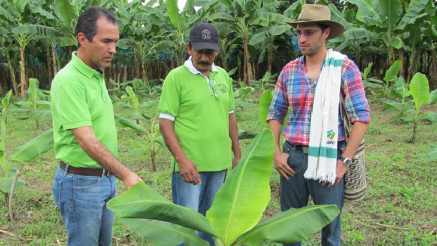 El ICA, Minagricultura y bananeros firman convenio de asistencia