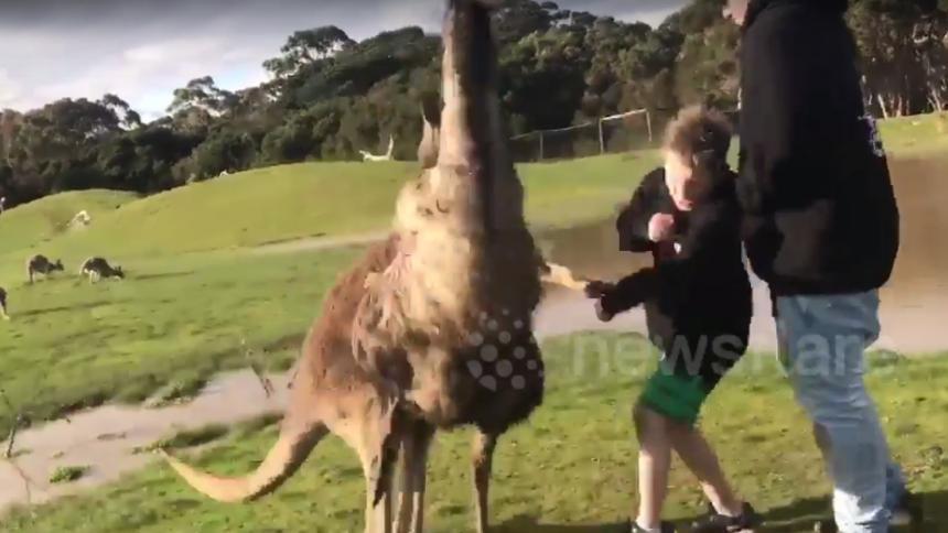 Canguro golpea a un niño y la reacción de sus padres lo hace viral