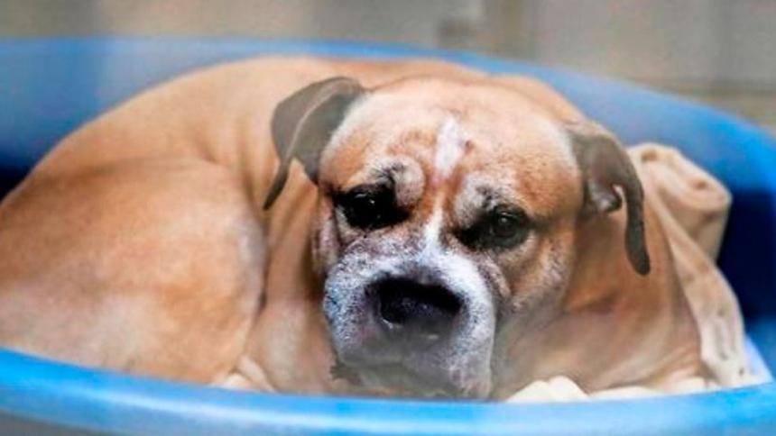La historia de 'Chico', el perro que mató a su dueña y su hijo y tiene a Alemania debatiendo sobre su sacrificio
