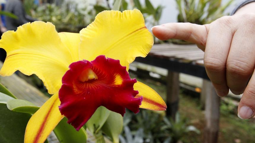 Este tipo de orquídea se da en Colombia, en el departamento de Antioquia.