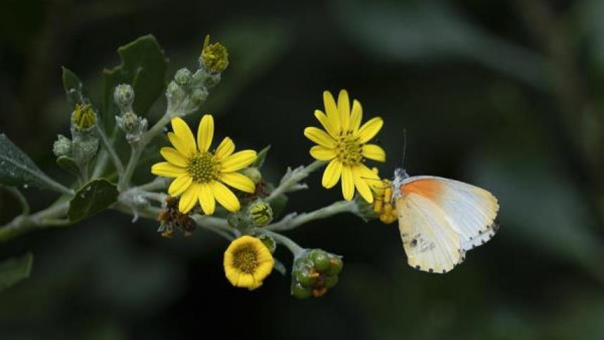 El aplazamiento afecta a la publicación de la Lista Roja de especies amenazadas elaborada por la Unión Internacional para la Conservación de la Naturaleza.