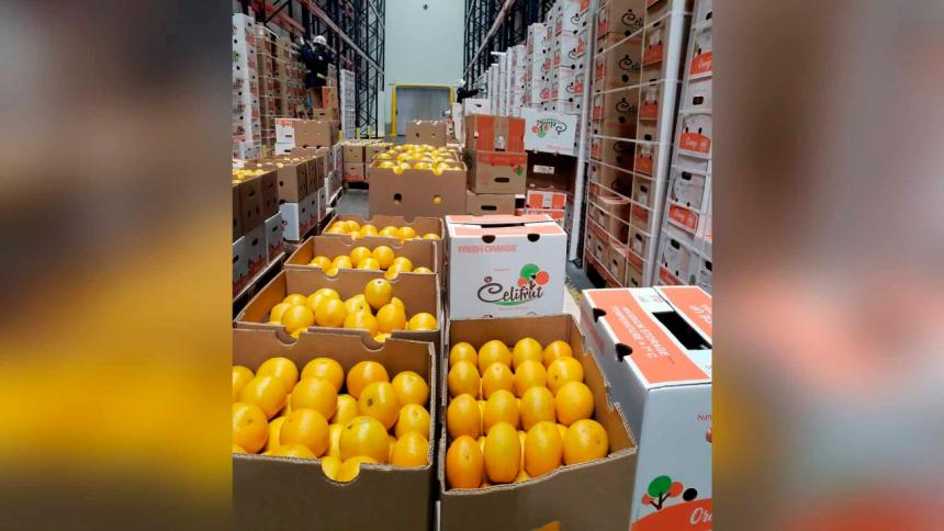 Puerto de Barranquilla consolida exportaciones de limón Tahití