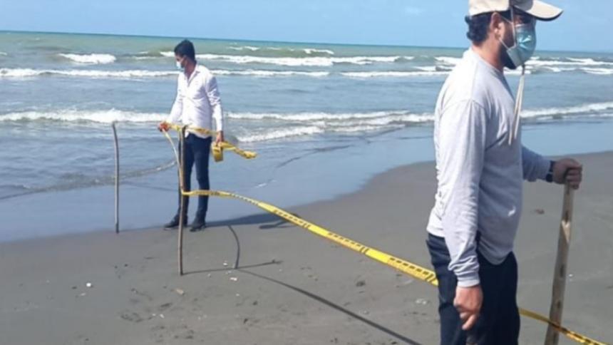 Retiran restos de ballena encallada en Puerto Escondido