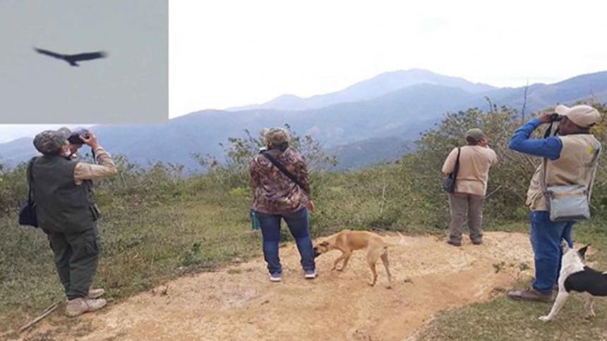 Tres cóndores fueron observados en La Guajira