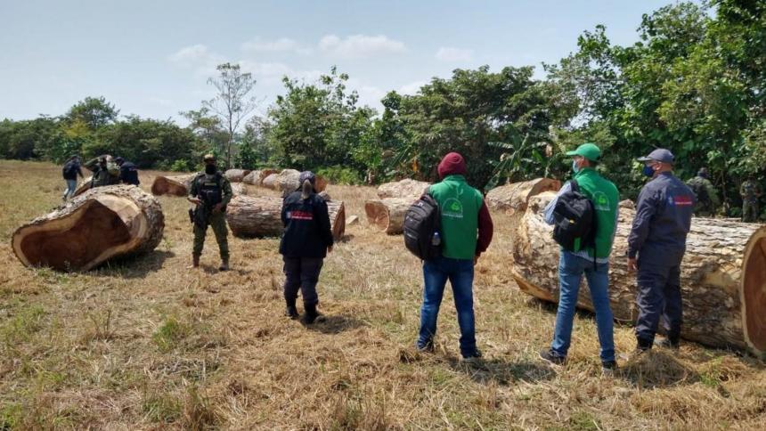 La tala indiscriminada en el sur de Sucre es una realidad