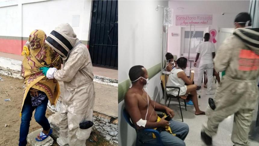 Ataque de abejas deja 31 personas lesionadas en el corregimiento de Leña