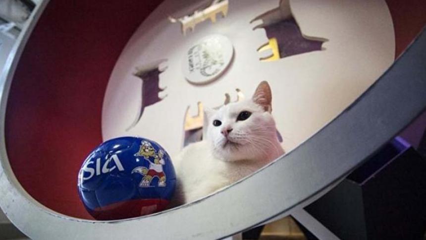 El gato del Mundial 2018 predecirá varios partidos de la Eurocopa