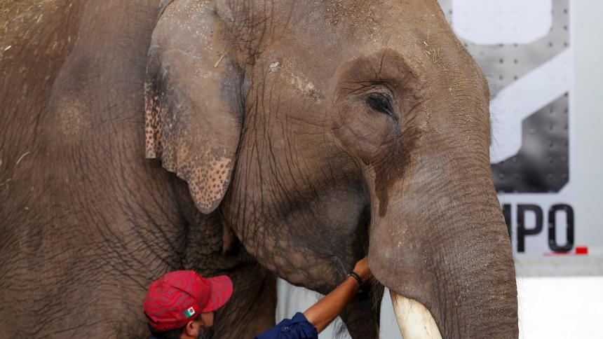 Liberan elefante abandonado por un circo