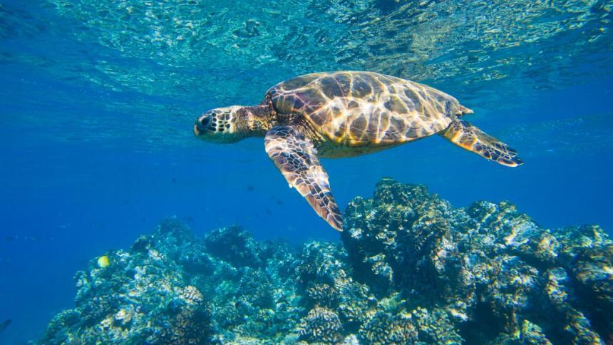 SOS: ecosistemas marinos en riesgo de colapso