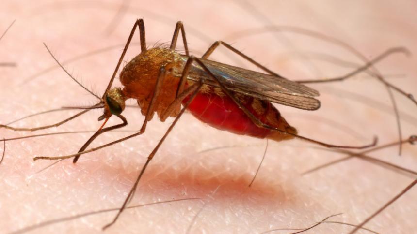 Brote de malaria fue controlado en Montería
