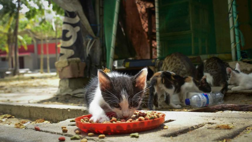 "Advierten por ""invasión de gatos"" en zona del velódromo"