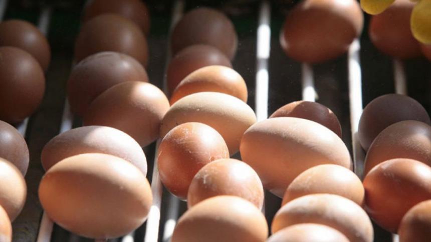 En $1.800 ofreció la docena de huevos 'Huevos Santa Rita' en Valle del Cauca