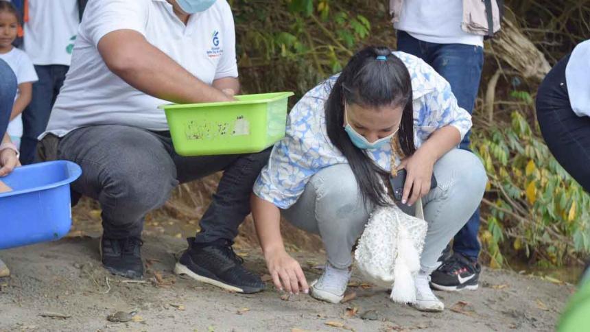 Liberan más de 200 neonatos de tortuga en Córdoba