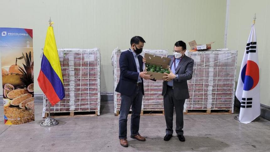 Aguacate hass colombiano llega a Corea del Sur