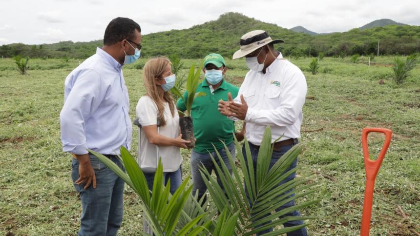 Siembran primera hectárea de palma de aceite en Repelón