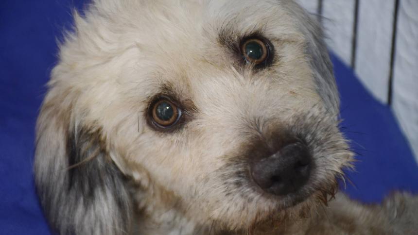 Falleció Negrita, mascota del rapero Rebel