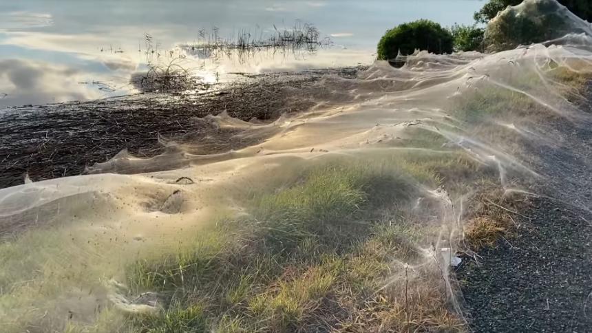 ¡Impresionante! Enorme telaraña cubrió un campo en Australia tras una tempestad