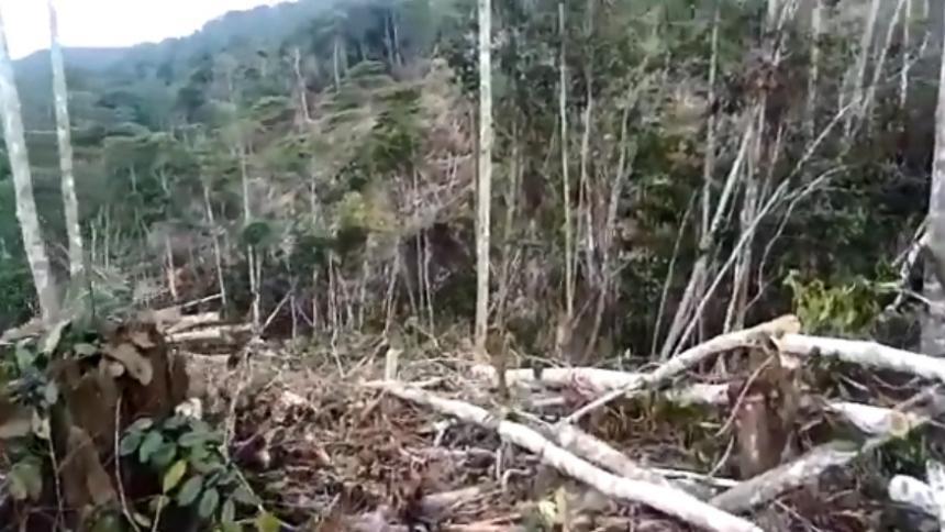Denuncian arboricidio en el Nudo de Paramillo sur de Córdoba