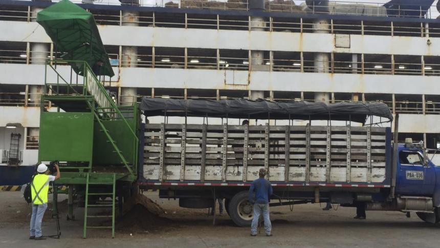 Embarques de ganado cumplen con protocolos de bienestar animal