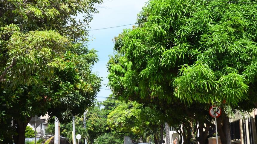 Claves para minimizar el riesgo de plagas en los árboles