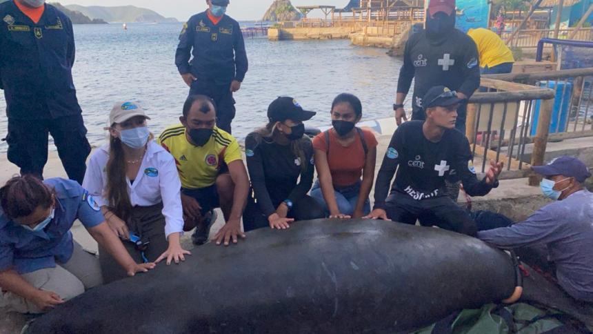 Liberan a 'Julieta', manatí rescatada por pescadores en el Parque Tayrona