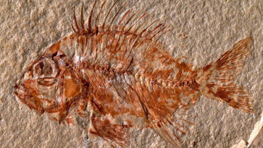 Hallan una nueva especie de pez en México que vivió hace 95 millones de años