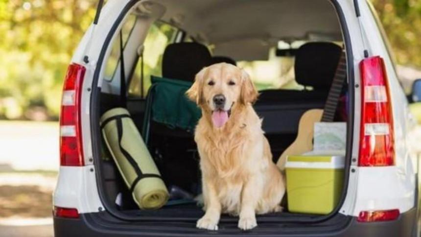 Nuevas medidas para ingreso y salida de mascotas