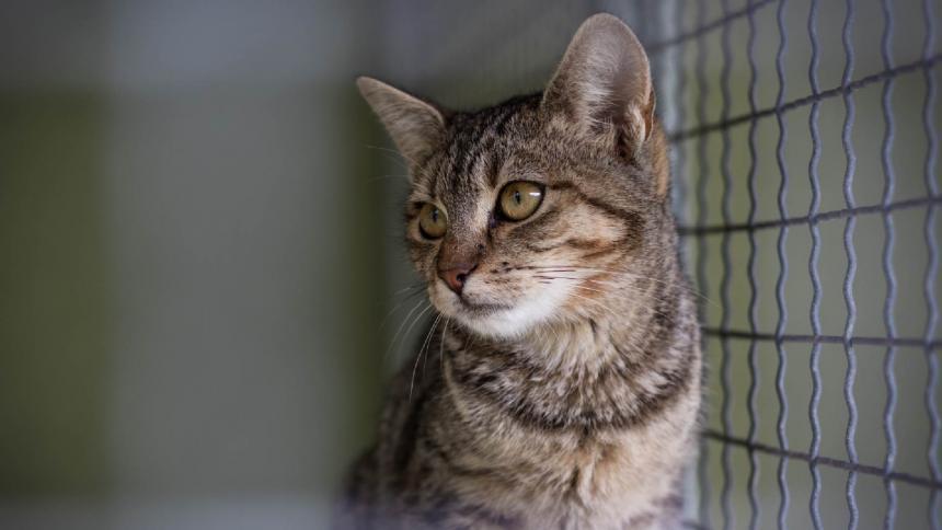 """Mujer irá a la cárcel """"por matar de hambre"""" a sus gatos"""