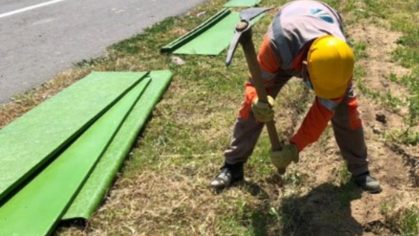 Ruta Costera activa plan para reforzar la conservación del Cangrejo Azul