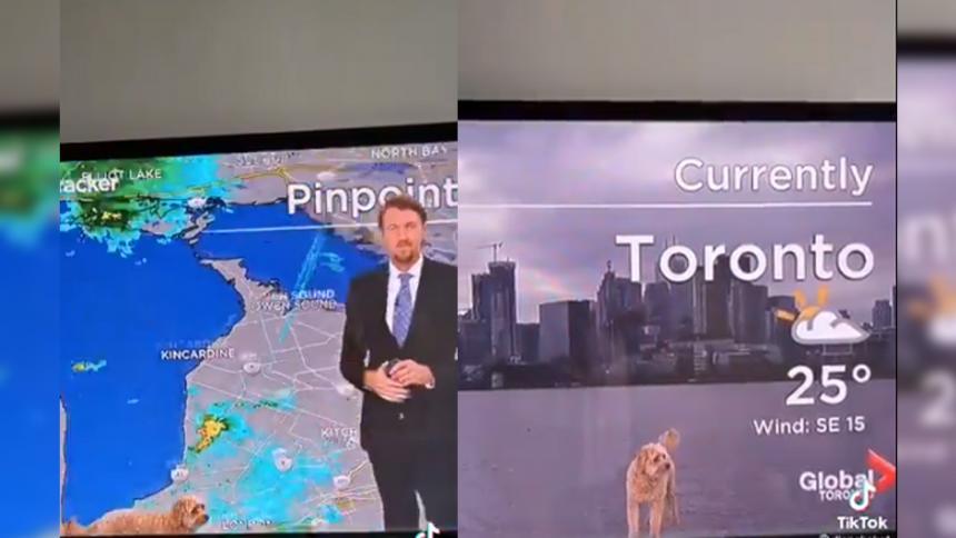 Tierna escena: perro se coló en reporte del clima para 'exigir' golosinas