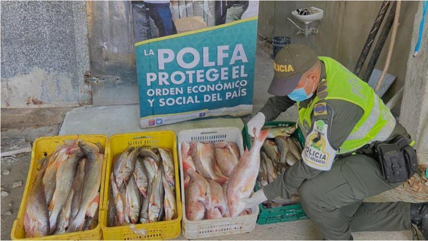 Decomisan 187 kilos de pescado de contrabando en la vía Riohacha - Palomino