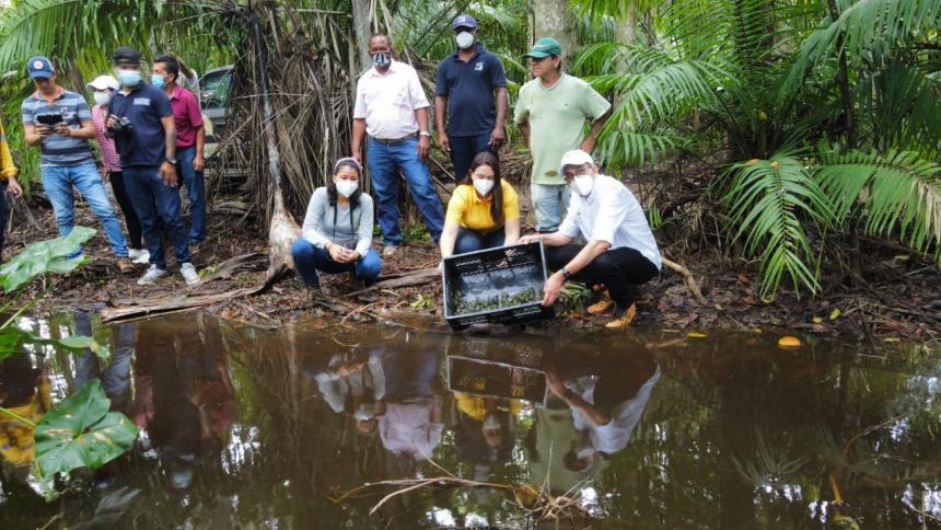 Liberan mil tortugas hicoteas en La Guajira