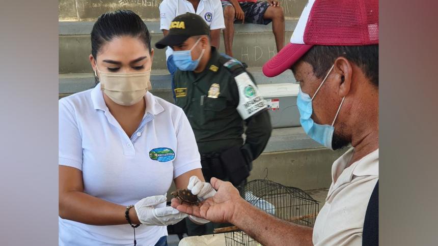 Este año en el Magdalena, Corpamag ha liberado 820 animales silvestres