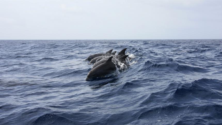 Matanza descomunal: más de mil delfines fueron cazados en tradicional evento