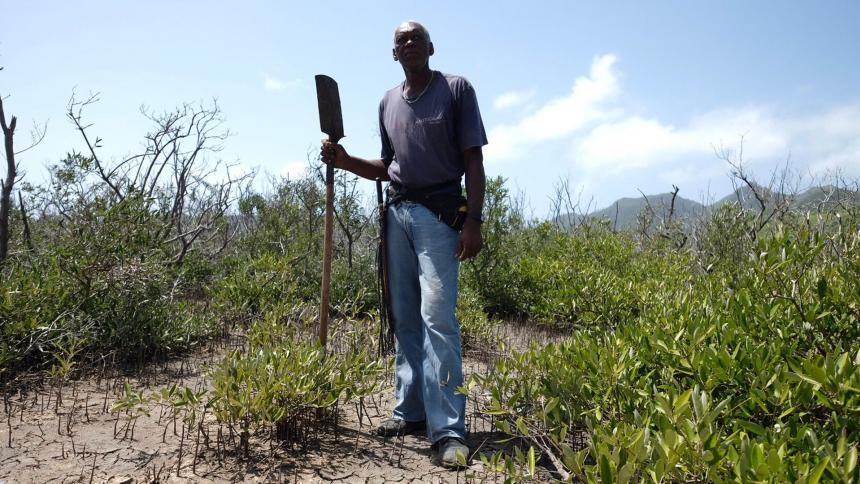 La siembra de mangle en Providencia ya es un hecho: Minambiente