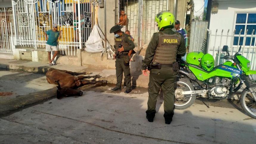 Otro caballo muere por maltrato en Cartagena
