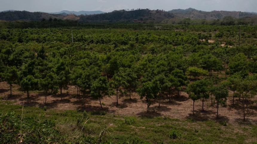 Colombia plantará este martes cinco millones de árboles durante la Gran Sembratón