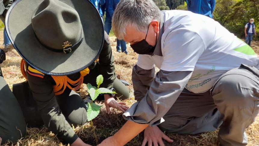 Más de 7,2 millones de árboles se sembraron en Colombia