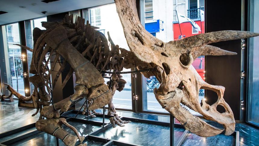 Subastarán el esqueleto de un dinosaurio de más de 66 millones de años