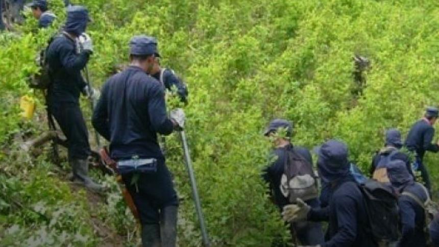 ¡Narcodeforestación! | Columna de José Félix Lafaurie
